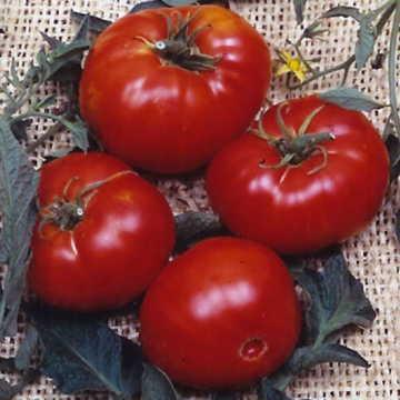 Hạt giống Brandywine Tomato Seeds