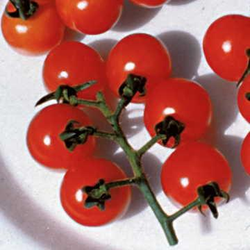 Hạt giống Ladybug Hybrid Tomato Seeds