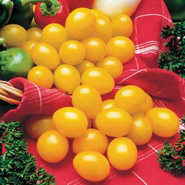 Hạt giống Ildi Tomato Seeds