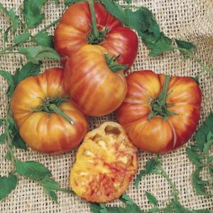 Hạt giống Big Rainbow Tomato Seeds