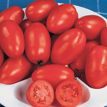 Hạt giống Organic Roma Tomato Seeds