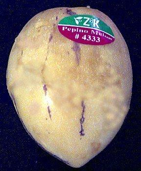 Seeds and Things Pepino Melon Pear 10 Seeds-solanum Muricata-indoors/out